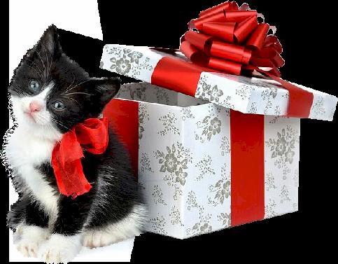 chaton-cadeau.png